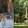 Une journée au milieu des biches dans l'ancienne capitale du Japon, puis au milieu des temples dans la montagne sacrée du Koya-san / Ein Tag inmitten der Rehe in der ehemaligen Hauptstadt Japans, und inmitten der Tempel am heiligen Berg von Koya-San