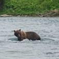 Descente en rafting d'une rivière kamchatkienne, ponctuée d'une rencontre inoubliable ! / Rafting-Tour auf dem Fluss Bystraja, mit einer unvergesslichen Begegnung!